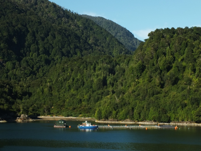 This is also the beginning of the area where you find salmon farms, a growing part of the Chilean economy.