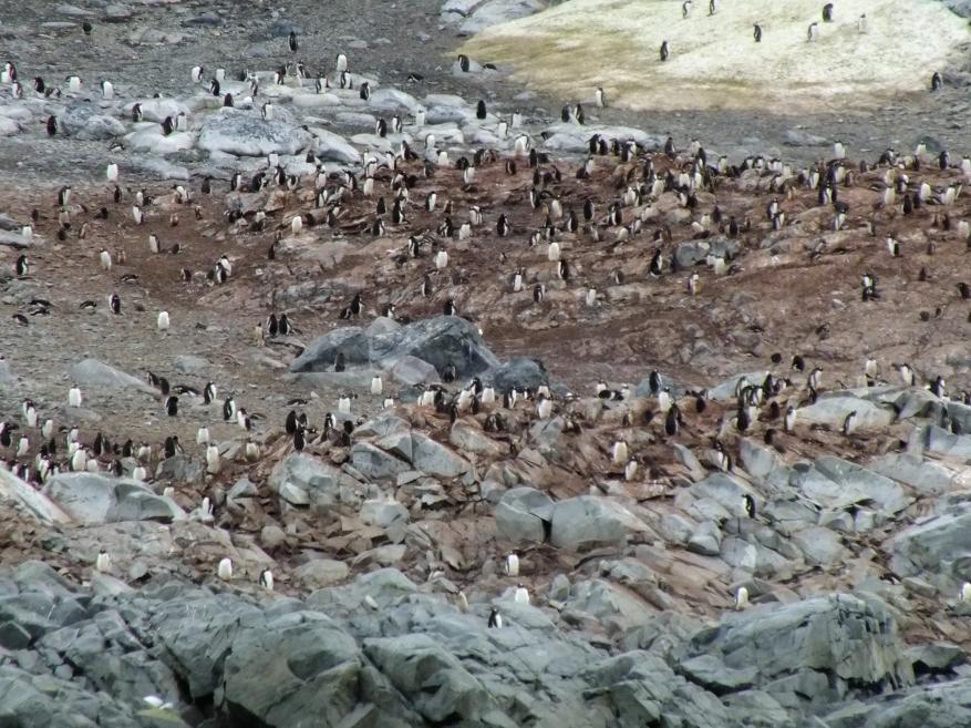 Antarctica Part 1 1483