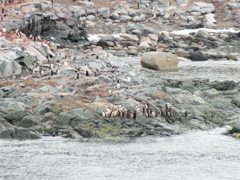 Antarctica Part 1 1484