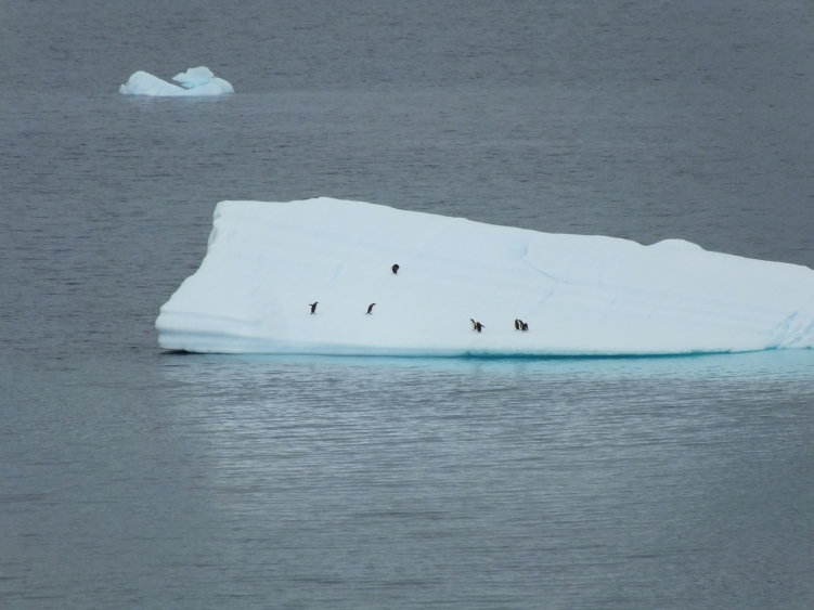 Antarctica Part 1 1576