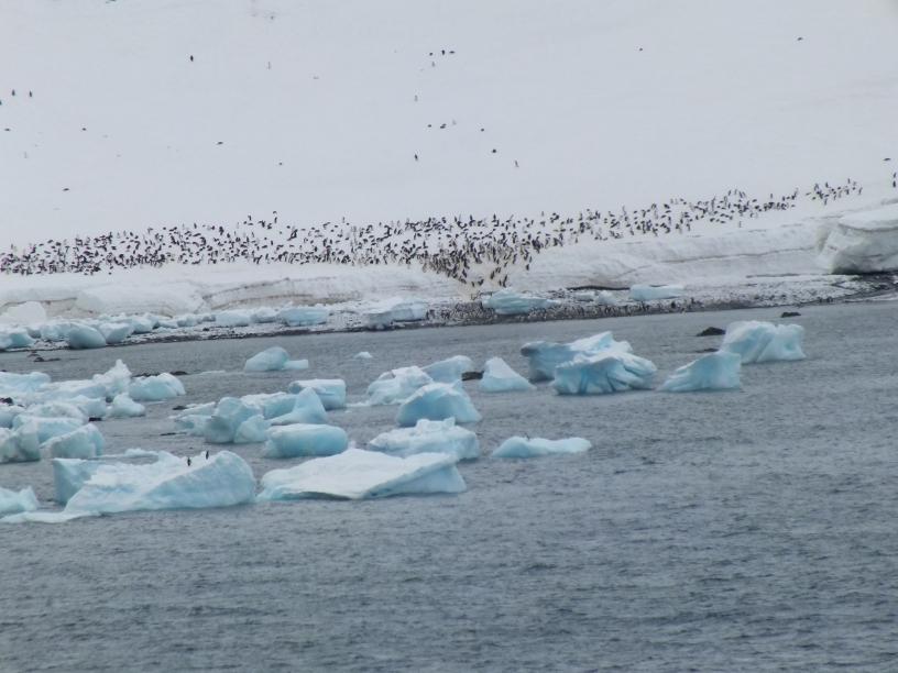 Antarctica Part 1 2131