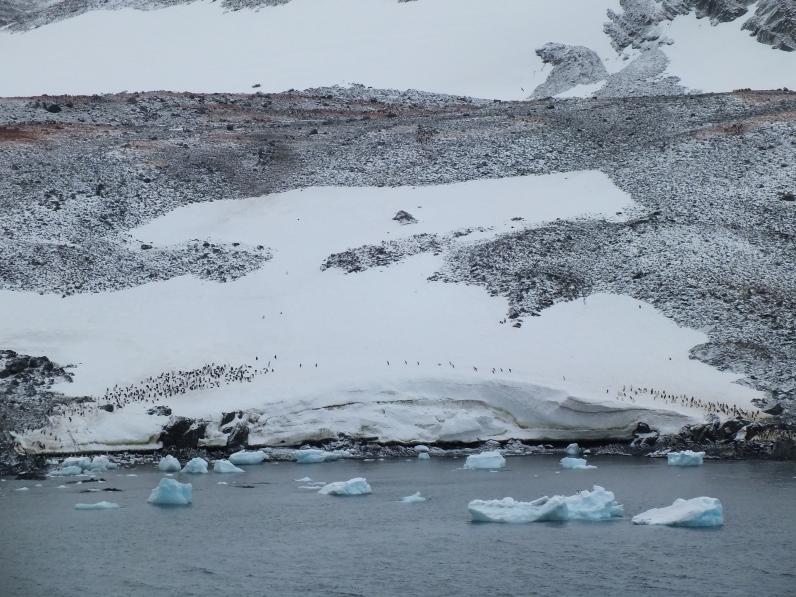 Antarctica Part 1 2138