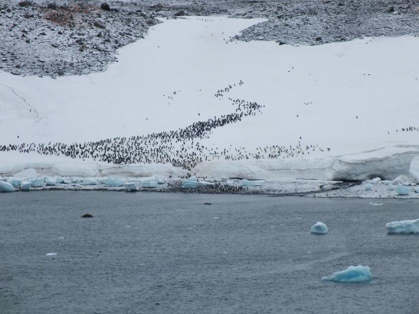 Antarctica Part 1 2139