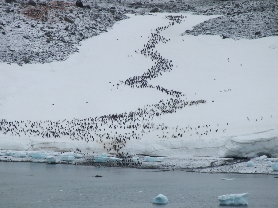 Antarctica Part 1 2142