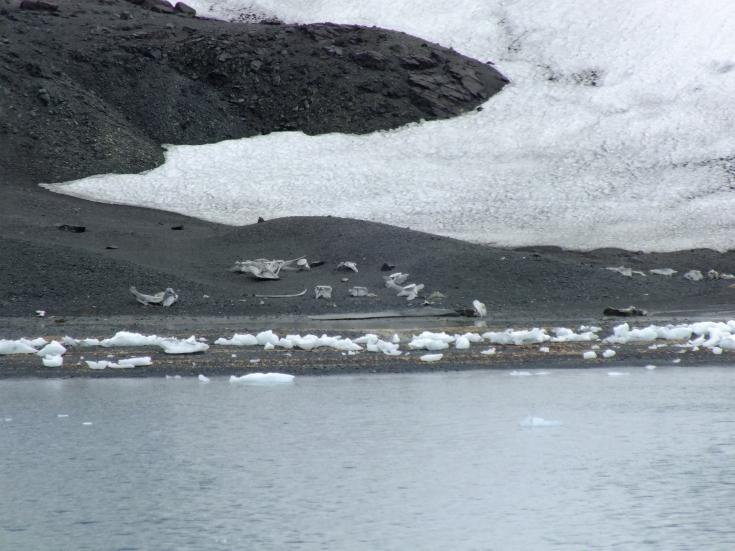 Antarctica Part 1 2286