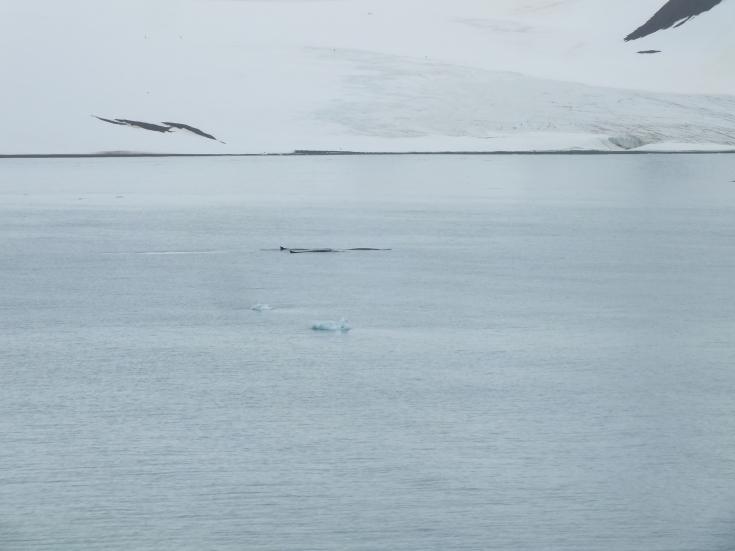Antarctica Part 1 2339