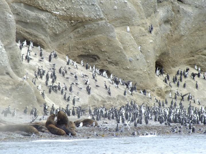 Antarctica Part 1 795