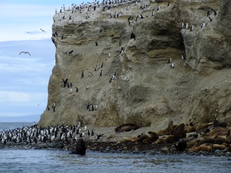 Antarctica Part 1 800
