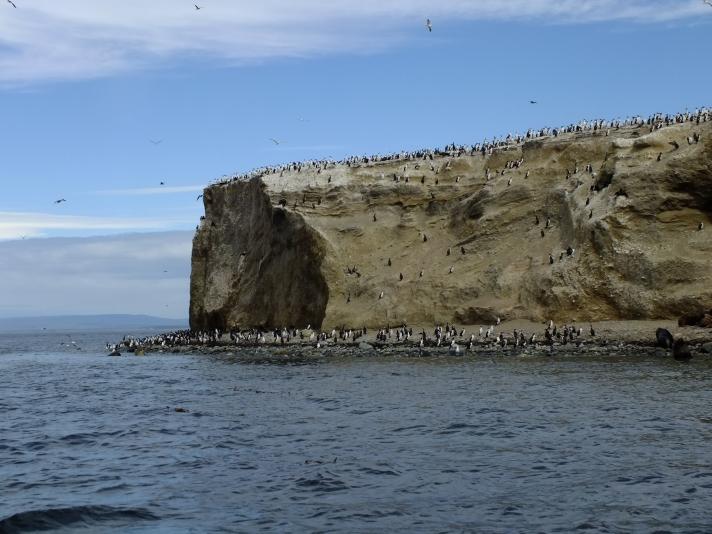 Antarctica Part 1 824
