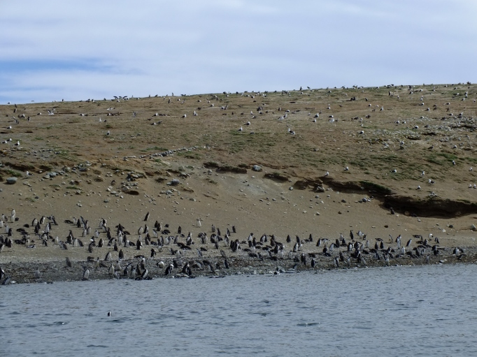 Antarctica Part 1 829