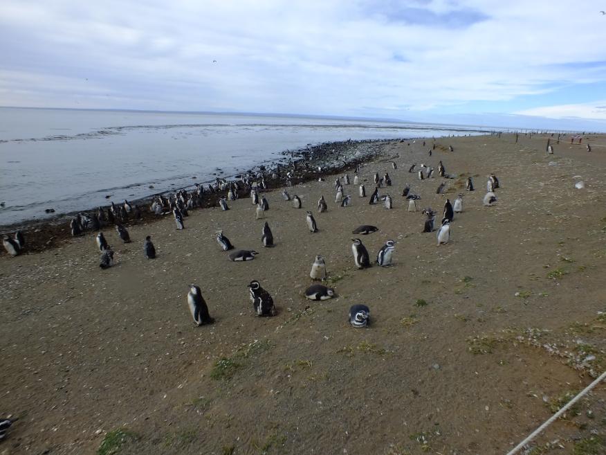Antarctica Part 1 832