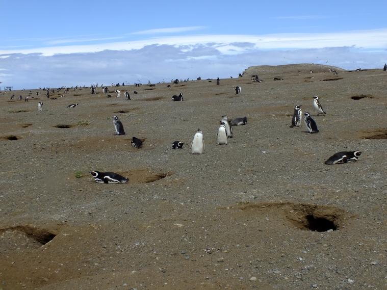 Antarctica Part 1 838