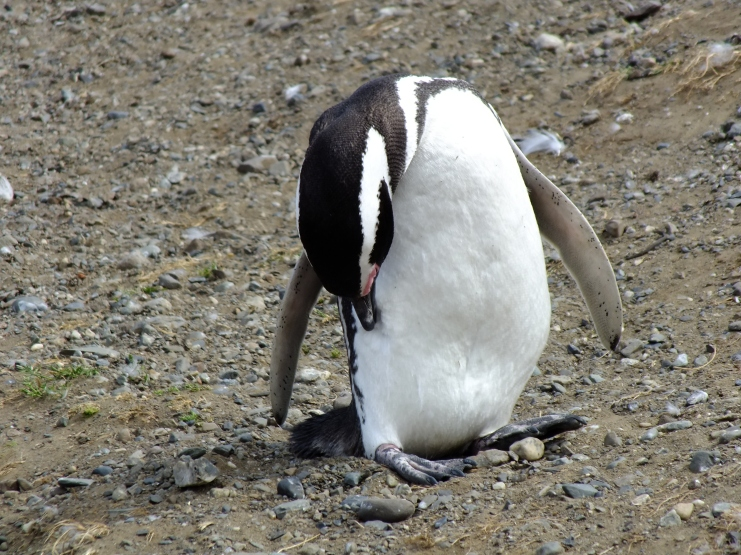 Antarctica Part 1 853