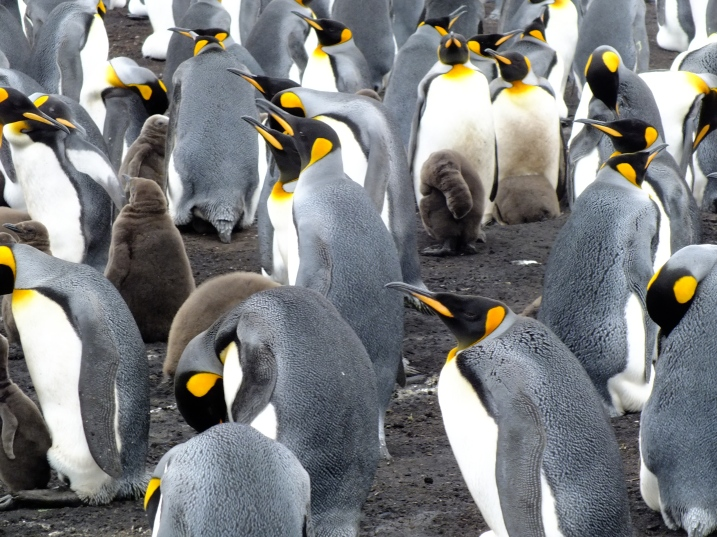 Antarctica Part 2 068