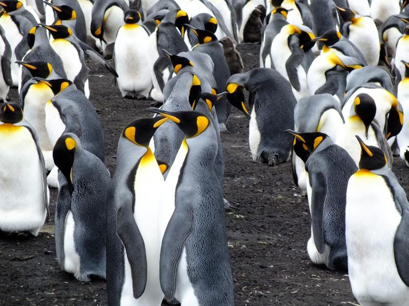 Antarctica Part 2 088