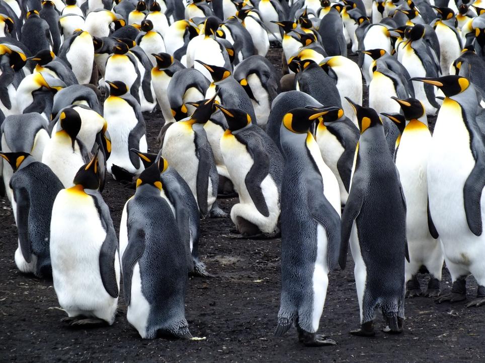 Antarctica Part 2 090