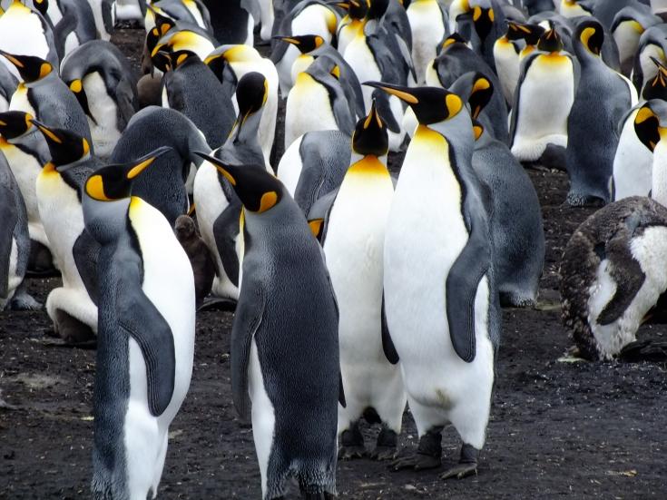 Antarctica Part 2 092