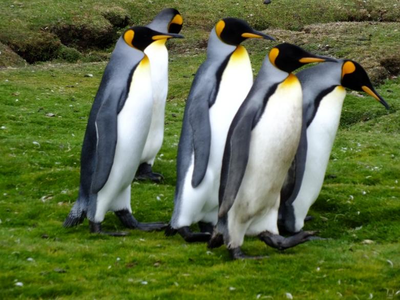 Antarctica Part 2 137
