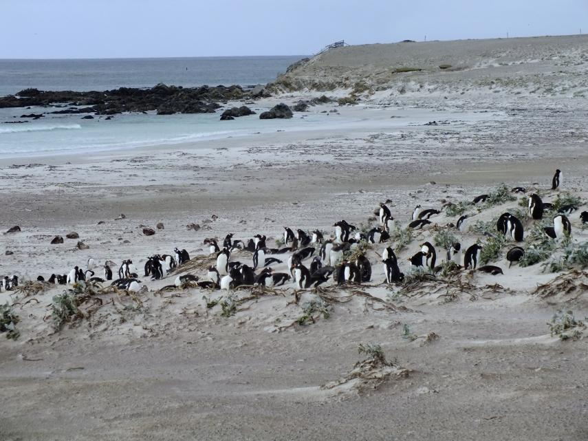 Antarctica Part 2 167