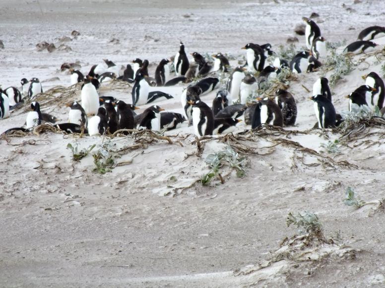Antarctica Part 2 172